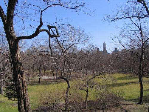 Image : http://www.zqcentral.com/downloads/newyork/centralpark.jpg