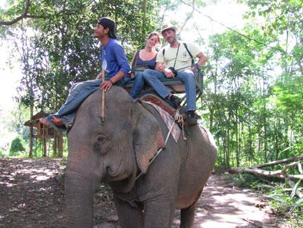 Image : http://www.zqcentral.com/sitegfx/bigpix/thailand/opdeolifant.jpg
